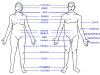 Human body features rus.jpg